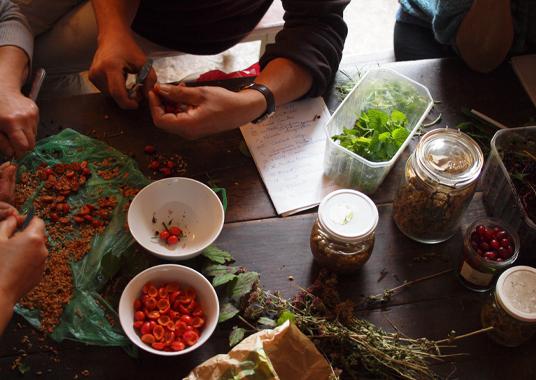 2013_atelier_plantes_oct4_