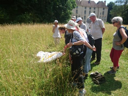 Château de Lusigny A la loupe et au crayon 30 juin 2018 observation coléoptères prairie