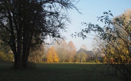 Le parc - brume d'automne