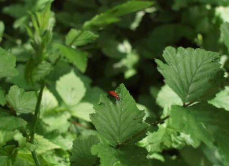 parc du château de Lusigny, un insecte