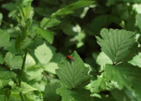 insect dans le parc du château de Lusigny