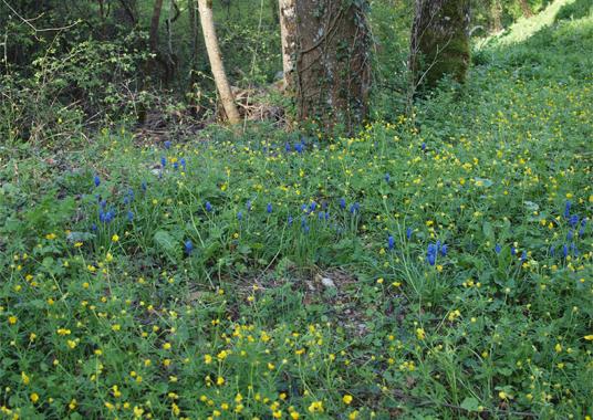 2011_balade botanique_fleurs_