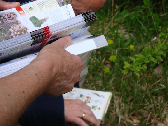 Botanique Arrière-pays 2011